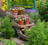 Pansy filled Flowerpots on a display stand Royalty Free Stock Photo