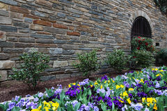 Colorful Pansies Franciscan Monastery DC Garden Royalty Free Stock Photo