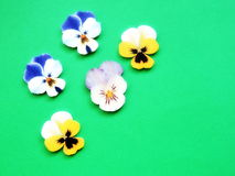 Colorful pansy, wood carving Stock Photography