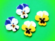 Colorful pansy, wood carving Stock Image