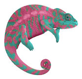 Colorful Panther Chameleon. Ambilobe panther chameleon with edited colors Royalty Free Stock Images