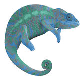 Colorful Panther Chameleon Royalty Free Stock Image