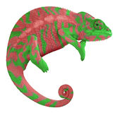 Colorful Panther Chameleon. Ambilobe panther chameleon with edited colors Royalty Free Stock Photos