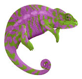 Colorful Panther Chameleon. Ambilobe panther chameleon with edited colors Stock Images