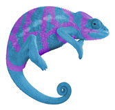 Colorful Panther Chameleon Create Royalty Free Stock Photos