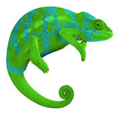 Colorful Panther Chameleon Create Stock Photography