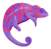 Colorful Panther Chameleon Create. Ambilobe panther chameleon with edited colors to spell the word create Stock Photos