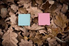 Colorful paper cards and nature. Stock Photo
