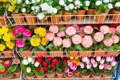 Colorful paper flower on shelves Stock Photo