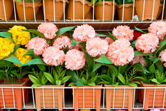 Colorful paper flower on shelves Stock Photos