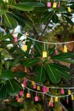 Colorful paper hanging on tree for Thailand activities SOI DAO. Drew lots - a way of choosing one from many paper.  one paper  has a special mark that means Stock Photos
