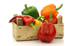 Colorful  paprika's(capsicum) in a wooden box Stock Photos