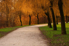 Colorful park. Footpath crossing a colorful park royalty free stock photography
