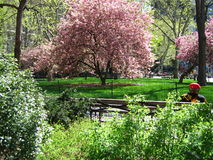 Colorful park. A spring day - colorful park, colorful shirt Royalty Free Stock Photo