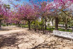 Colorful park in Cadiz,Spain. At springtime Royalty Free Stock Photography