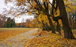 Colorful park during fall. Alley in park with fallen leaves Stock Image