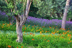 Colorful park with flowers Stock Photography