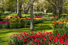 Colorful park in spring. Colorful spring flowers in park on early morning in april Royalty Free Stock Image