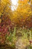 Colorful Park trail in autumn. In Manitoba royalty free stock photos