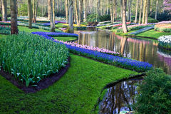 Colorful park with tulips, daffodils and hyacinths Royalty Free Stock Photography