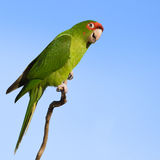 Colorful parrot. Stock Photo
