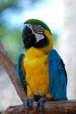 Colorful parrot Royalty Free Stock Images
