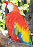 A Colorful Parrot. A Beautiful Parrot On The Tree Branch at Orlando Zoo, Florida Stock Photos