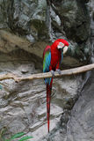 Colorful parrot. Stock Photos