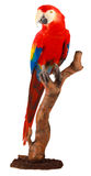 Colorful parrot. A beautiful picture of a colorful parrot Stock Illustration