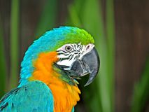 Colorful parrot. Photo portrait outside Royalty Free Stock Images