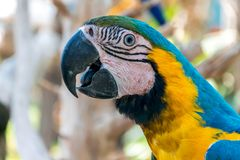 Colorful parrot. Beautiful color parrot and nice look stock images
