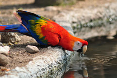 Colorful parrot bird Royalty Free Stock Image