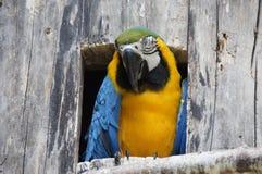 Colorful Parrot Bird Stock Photo