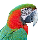 Colorful parrot bird,Green and red macaw stock photo