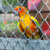 Colorful parrot bird sitting in birdcage Stock Photo