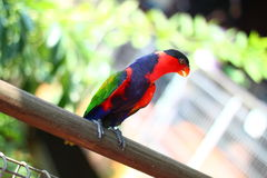 Colorful parrot bird Stock Images