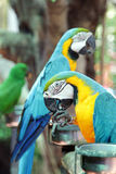 Colorful parrot bird Royalty Free Stock Images