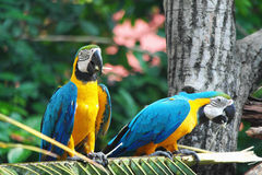 Colorful Parrot Birds Royalty Free Stock Images
