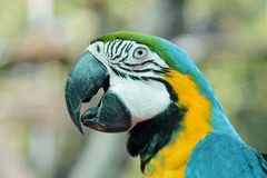 Colorful parrot birds Stock Photo