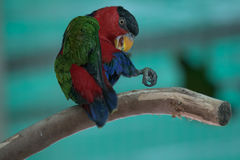 A colorful parrot on a branch Stock Images