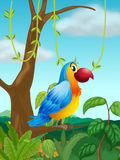 A colorful parrot at the branch of a tree Stock Images