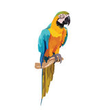 Colorful parrot on a branch Vector Stock Photo