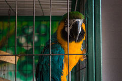 Colorful parrot in a cage Royalty Free Stock Photo