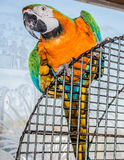 Colorful Parrot on a Cage Stock Images