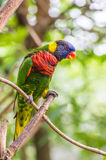 Colorful Parrot Stock Images