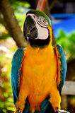 Colorful parrot closeup shot Stock Images