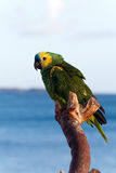 Colorful Parrot with clouds in the background , Stock Images