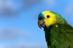 Colorful Parrot with clouds in the background , Stock Photos