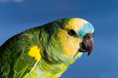 Colorful Parrot with clouds in the background , cl Stock Image