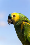 Colorful Parrot with clouds in the background , cl Royalty Free Stock Image